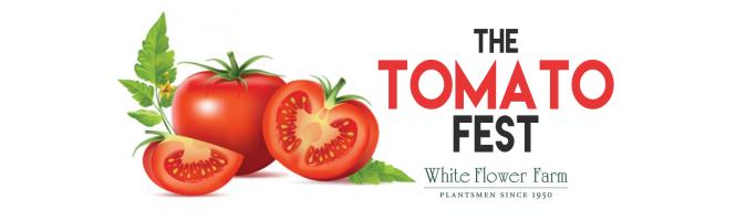 Tomato-fest-top-picture